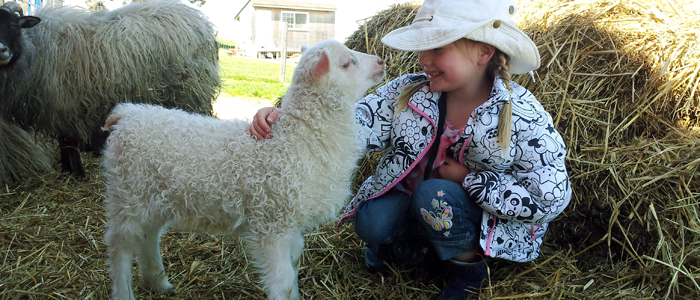 Mutual Trust | Icelandic Lamb and Young Girl